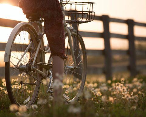 fietsendrager getest: beste fietsendragers van 2020