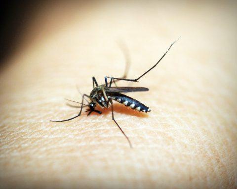 beste muggenlamp uit de test van 2020